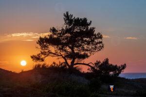 Boom op duin bij zonsondergang - Strandfotograaf