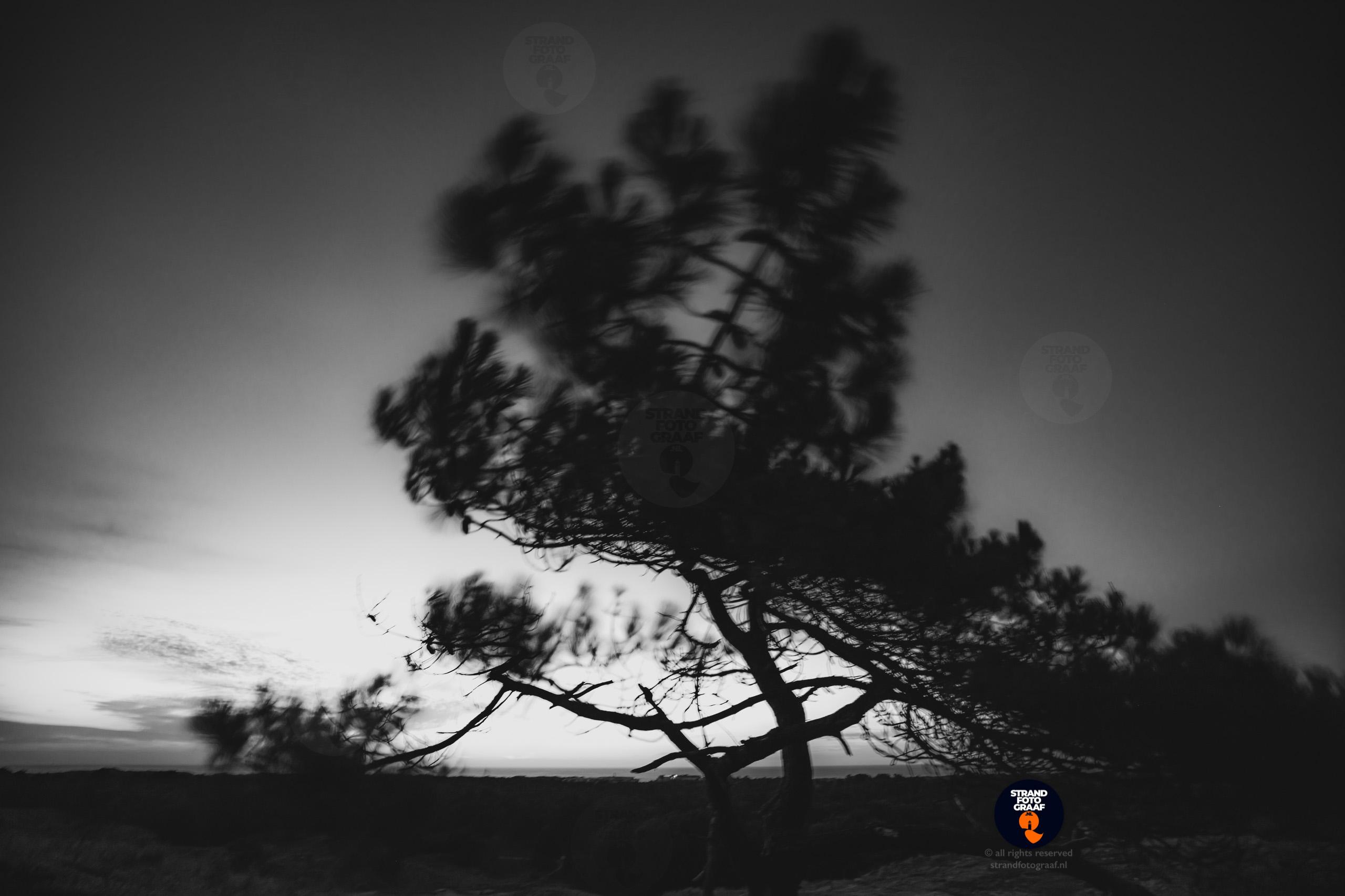 Boom op duin in de nacht - Strandfotograaf