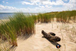 Helmgras en drijfhout in duinen bij zonlicht - Strandfotograaf
