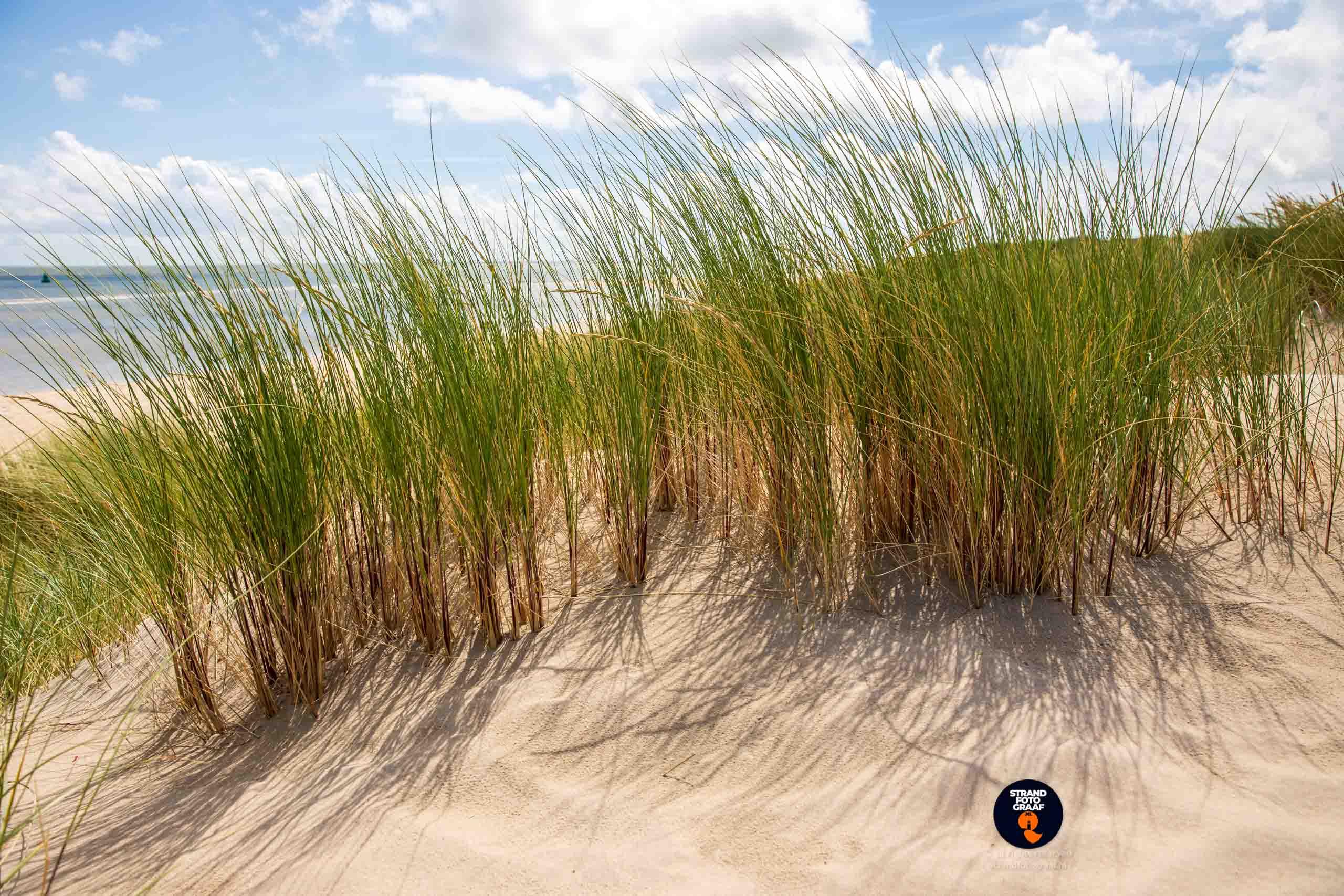 Helmgras en duinen in zonlicht - Strandfotograaf
