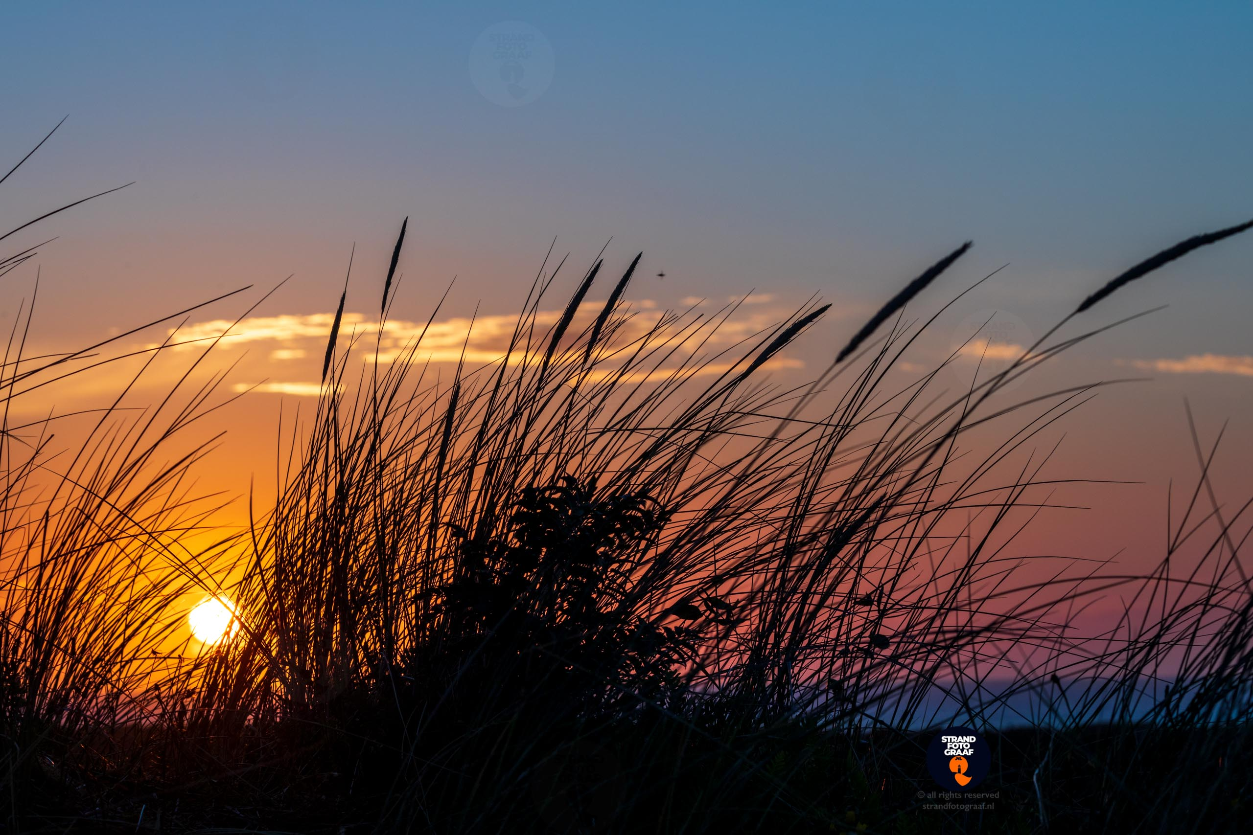 Helmgras bij zonsondergang - Strandfotograaf